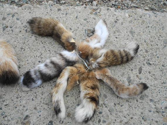 Bobcat Tails