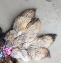 Coyote Tails 1