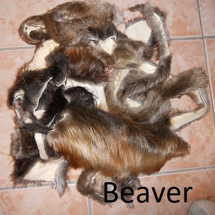 Fur Scrap Beaver