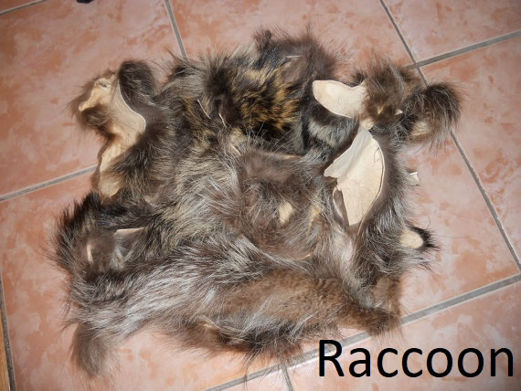 Fur Scrap raccoon
