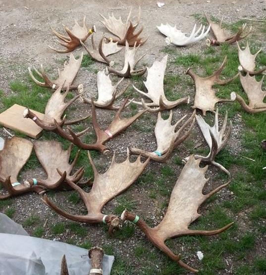 PLT Moose Shed