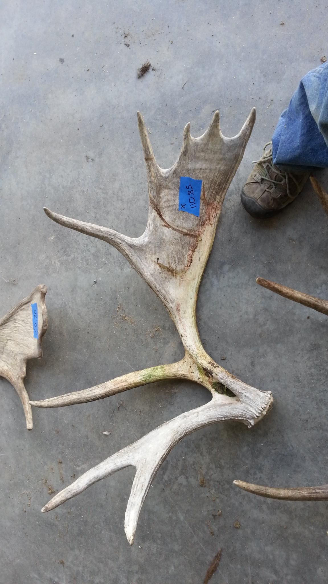 PLT Moose Sheds c