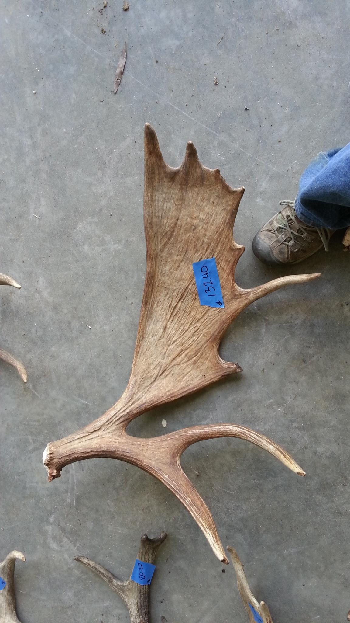 PLT Moose Sheds e