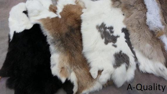 Rabbit Hides A Qual 2