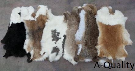 Rabbit Hides A Qual